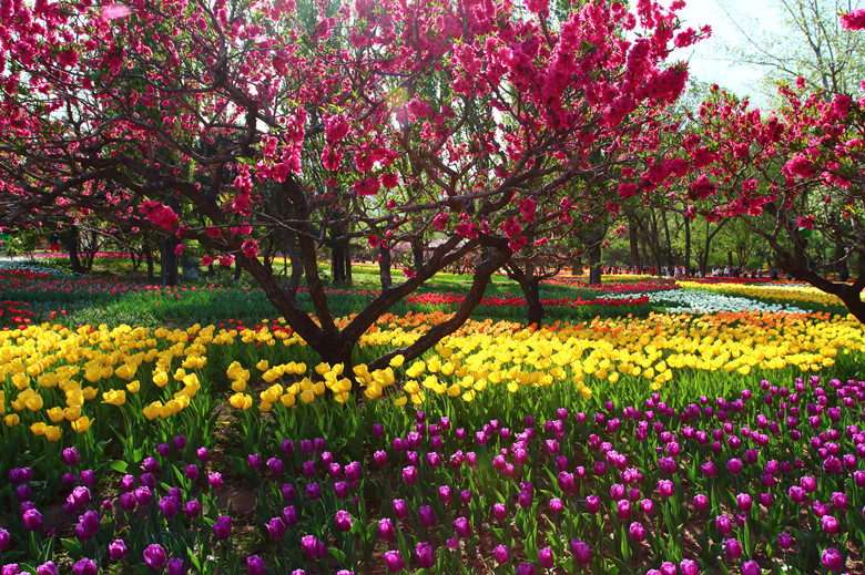 7 Places To See The Spring Blossoms In Beijing