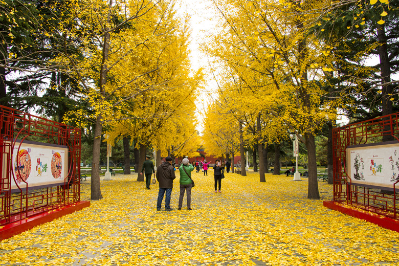 dreamstime_l_62625916_副本Explore The 10 Best Parks in Beijing map