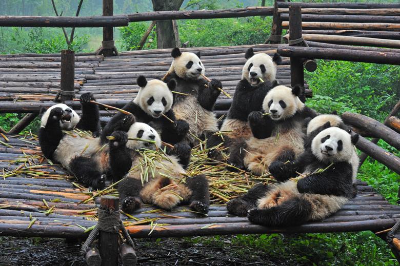 Why Everyone Should Visit China At Least Once Panda